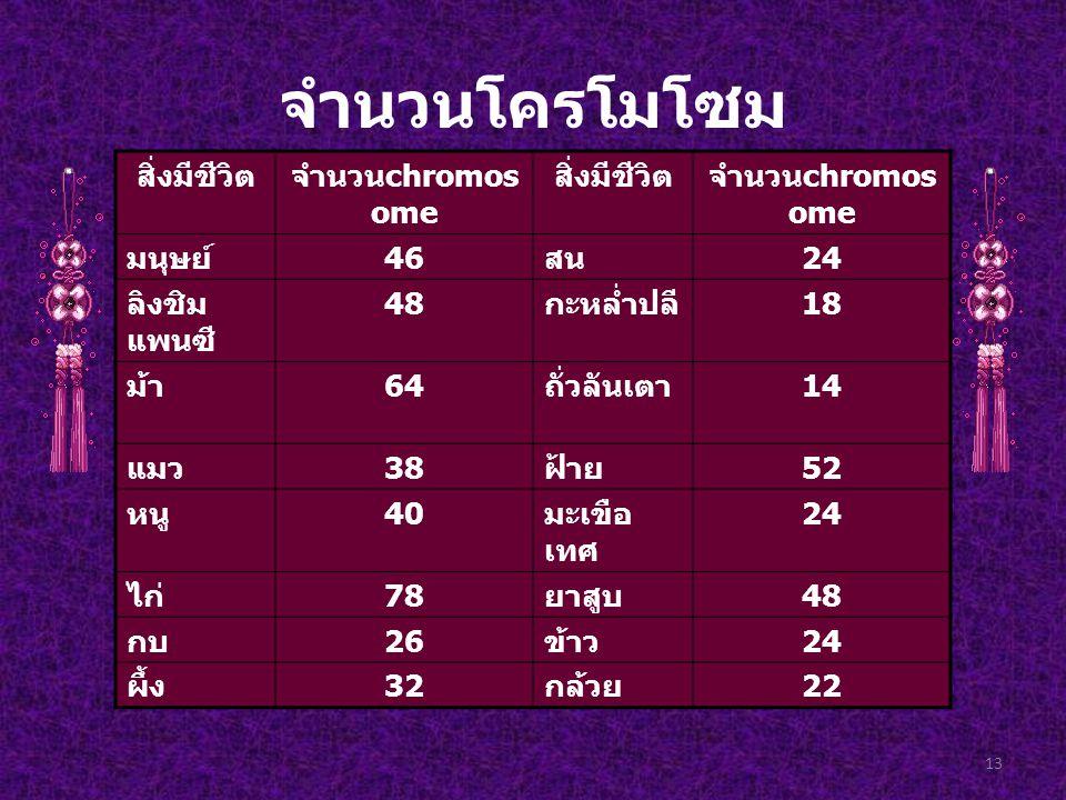 จำนวนโครโมโซม 13 สิ่งมีชีวิตจำนวน chromos ome สิ่งมีชีวิตจำนวน chromos ome มนุษย์ 46 สน 24 ลิงชิม แพนซี 48 กะหล่ำปลี 18 ม้า 64 ถั่วลันเตา 14 แมว 38 ฝ้