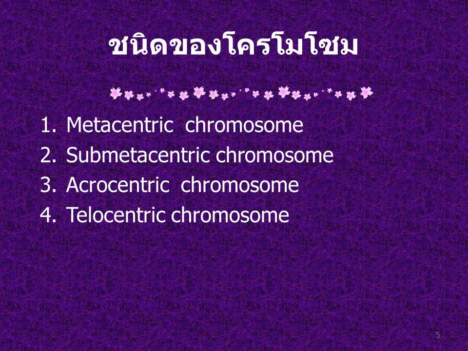 ชนิดของโครโมโซม 1.Metacentric chromosome 2.Submetacentric chromosome 3.Acrocentric chromosome 4.Telocentric chromosome 5