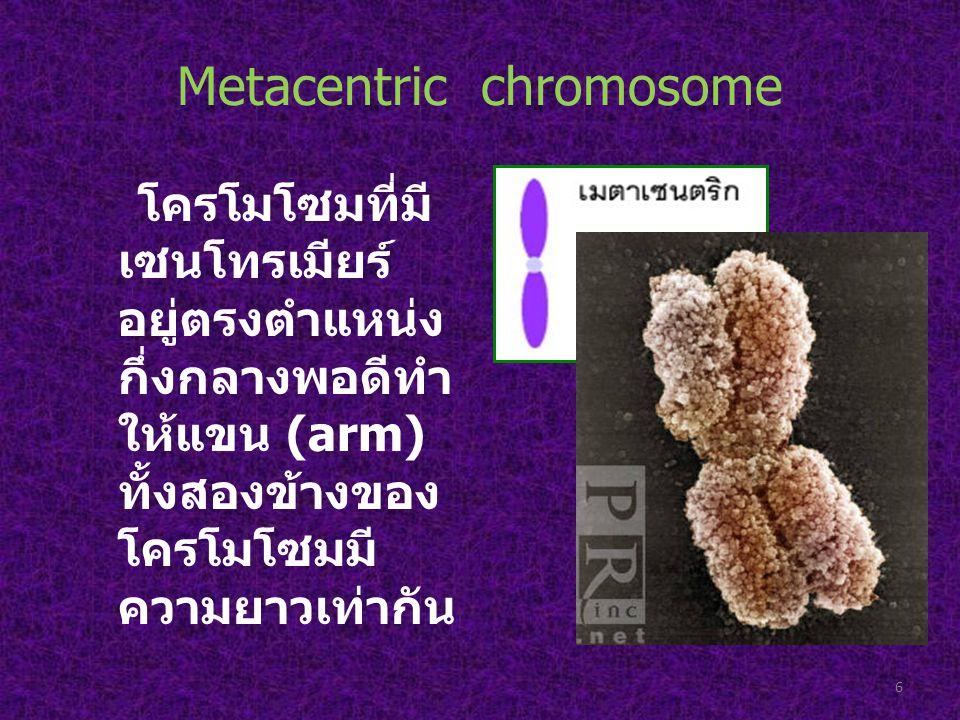Metacentric chromosome โครโมโซมที่มี เซนโทรเมียร์ อยู่ตรงตำแหน่ง กึ่งกลางพอดีทำ ให้แขน (arm) ทั้งสองข้างของ โครโมโซมมี ความยาวเท่ากัน 6