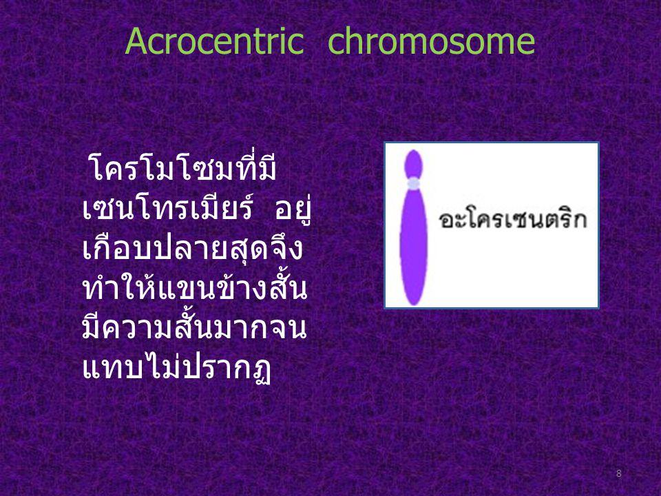 Acrocentric chromosome โครโมโซมที่มี เซนโทรเมียร์ อยู่ เกือบปลายสุดจึง ทำให้แขนข้างสั้น มีความสั้นมากจน แทบไม่ปรากฏ 8