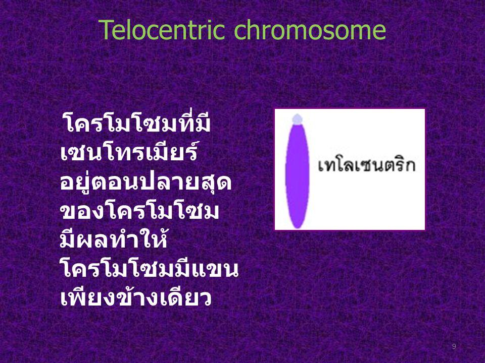 Telocentric chromosome โครโมโซมที่มี เซนโทรเมียร์ อยู่ตอนปลายสุด ของโครโมโซม มีผลทำให้ โครโมโซมมีแขน เพียงข้างเดียว 9