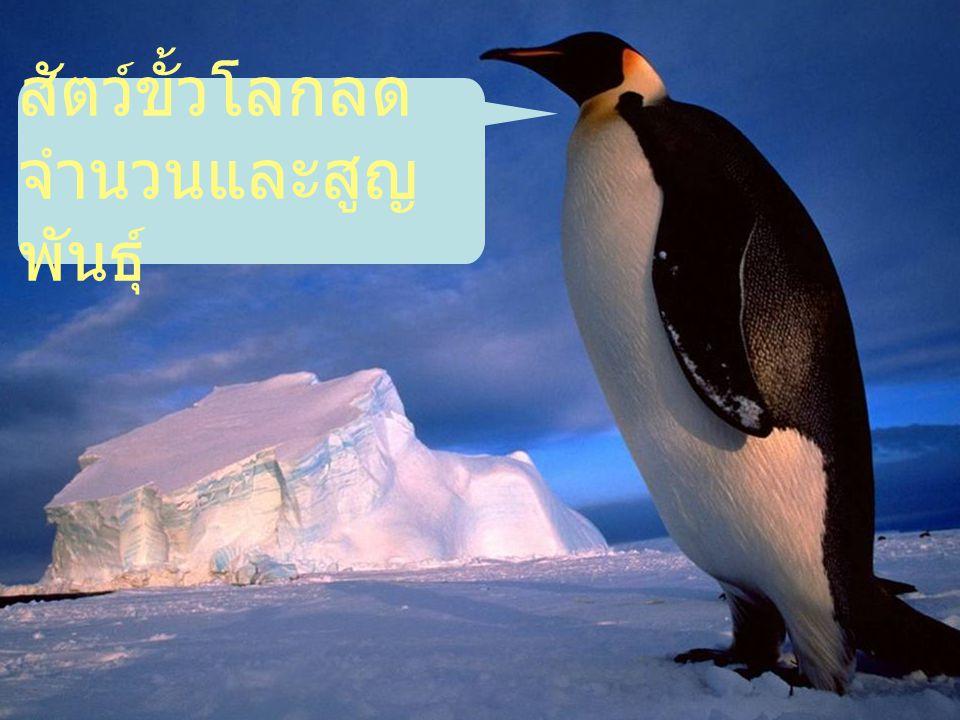 สัตว์ขั้วโลกลด จำนวนและสูญ พันธุ์