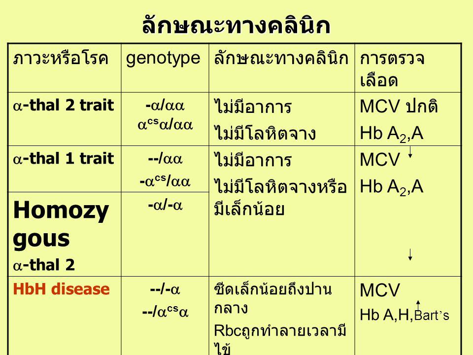 ลักษณะทางคลินิก ภาวะหรือโรค genotype ลักษณะทางคลินิกการตรวจ เลือด  -thal 2 trait-  /   cs  /  ไม่มีอาการ ไม่มีโลหิตจาง MCV ปกติ Hb A 2,A  -th