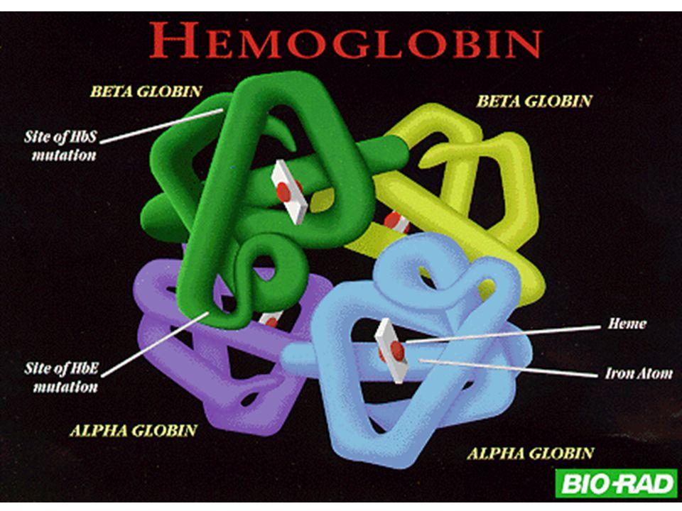 b-thalassemia trait  0 /  A,  + /  A Homozygous b-thalassemia b -thalassemia/Hb E disease   /     /   b-thal/Hb E (         