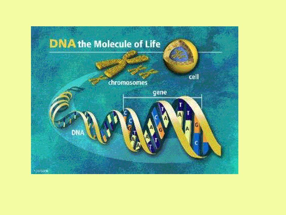ภาวะ Double heterozygosity