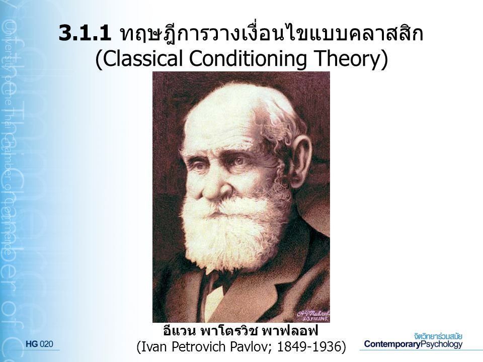 3.1.1 ทฤษฎีการวางเงื่อนไขแบบคลาสสิก (Classical Conditioning Theory) ผู้พัฒนาทฤษฎีการวางเงื่อนไขแบบคลาสสิก คือ อีแวน พาโตรวิช พาฟลอฟ (Ivan Petrovich Pavlov; 1849-1936) นักสรีรวิทยาชาวรัสเซีย ผู้ซึ่งได้รับรางวัล โนเบลในปี 1904 เกี่ยวกับการวิจัยด้านระบบการย่อยอาหารของ สุนัข ในการศึกษาวิจัยดังกล่าวนี้ พาฟลอฟได้ทำการทดลอง โดยการนำผงเนื้อ (meat powder) ไปวางไว้ที่ลิ้นของสุนัข ซึ่ง ปรากฏว่าสุนัขมีน้ำลายไหลออกมา และหลังจากที่ทำการให้ผง เนื้อแก่สุนัขเช่นนี้ซ้ำแล้วซ้ำอีก พาฟลอฟก็ได้สังเกตเห็นว่าสุนัข มีน้ำลายไหลออกมา แม้เมื่อมันได้เห็นเพียงแค่จานอาหารของ มัน หรือแม้แต่เพียงแค่การได้ยินเสียงฝีเท้าของนักวิจัยผู้ที่ให้ อาหารแก่มัน