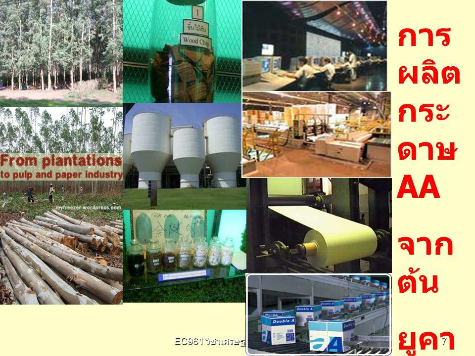 7 การ ผลิต กระ ดาษ AA จาก ต้น ยูคา ลิปตั ส