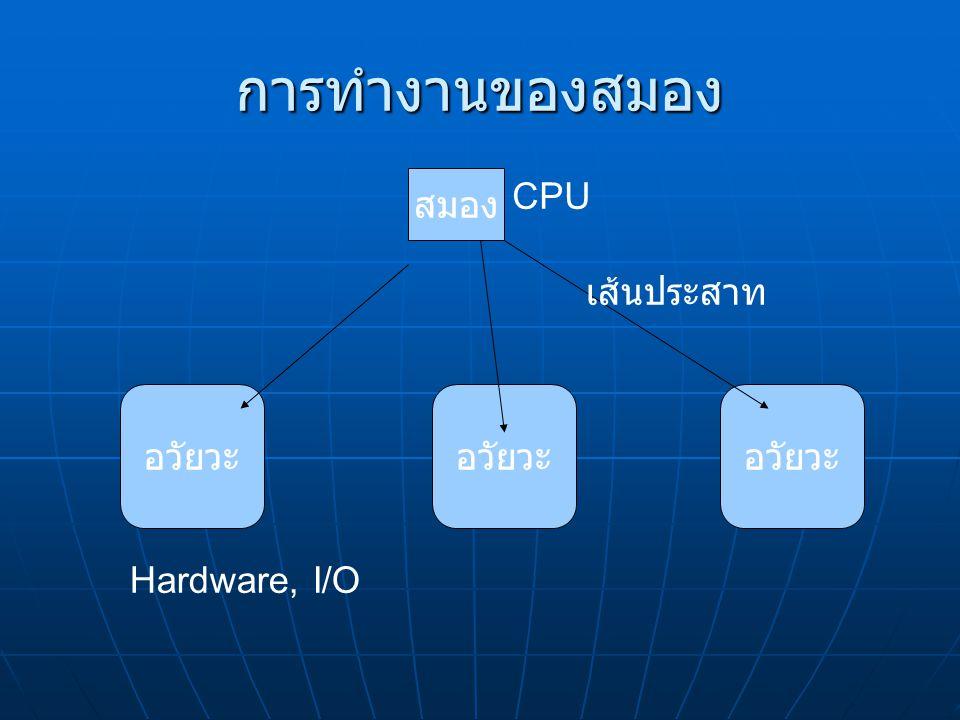 การทำงานของสมอง สมอง อวัยวะ เส้นประสาท CPU Hardware, I/O