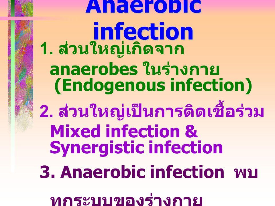 Anaerobic infection 1. ส่วนใหญ่เกิดจาก anaerobes ในร่างกาย (Endogenous infection) 2. ส่วนใหญ่เป็นการติดเชื้อร่วม Mixed infection & Synergistic infecti