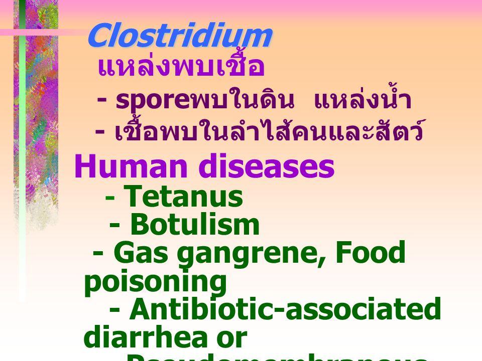 Clostridium Clostridium แหล่งพบเชื้อ - spore พบในดิน แหล่งน้ำ - เชื้อพบในลำไส้คนและสัตว์ Human diseases - Tetanus - Botulism - Gas gangrene, Food pois