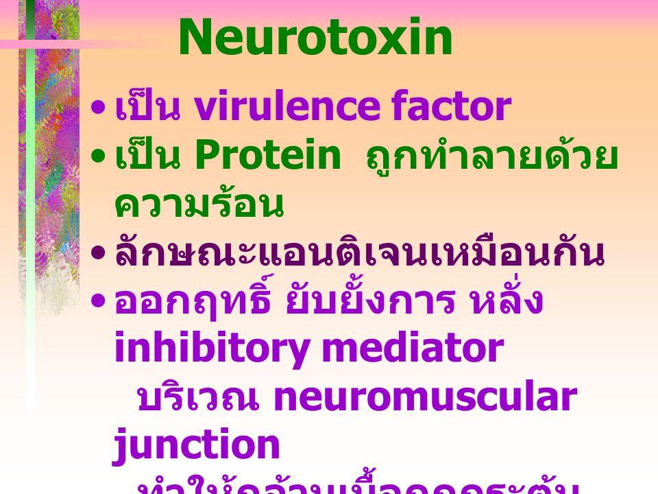 Neurotoxin เป็น virulence factor เป็น Protein ถูกทำลายด้วย ความร้อน ลักษณะแอนติเจนเหมือนกัน ออกฤทธิ์ ยับยั้งการ หลั่ง inhibitory mediator บริเวณ neuro