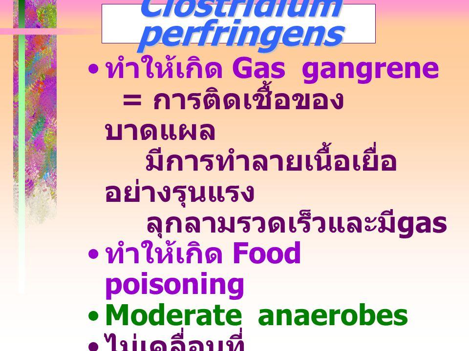 Clostridium perfringens ทำให้เกิด Gas gangrene = การติดเชื้อของ บาดแผล มีการทำลายเนื้อเยื่อ อย่างรุนแรง ลุกลามรวดเร็วและมี gas ทำให้เกิด Food poisonin