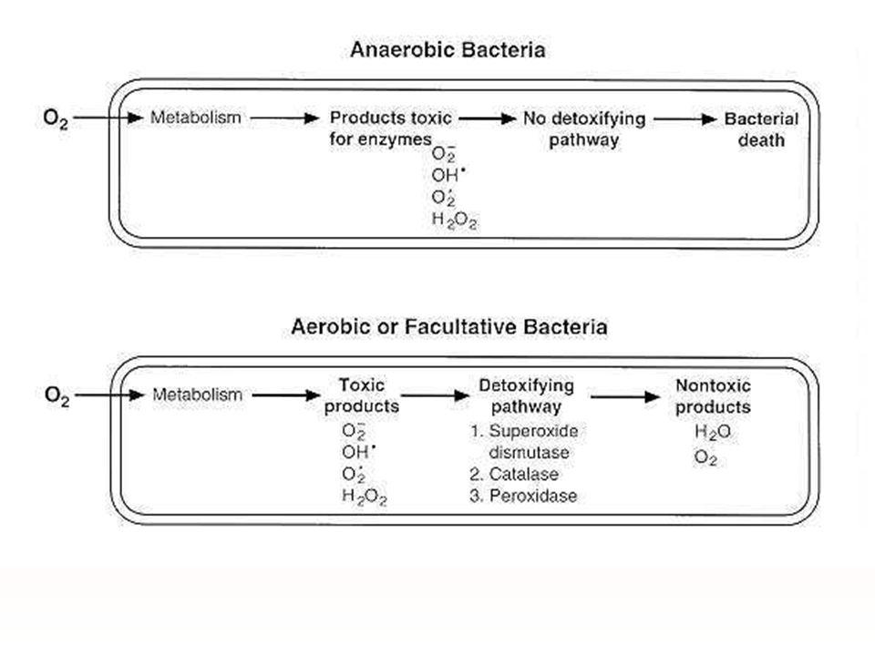 ชนิดของ Anaerobic bacteria 1.Strict anaerobes ทนทานต่อ O 2 < 0.5% ;Clostridium tetani 2.