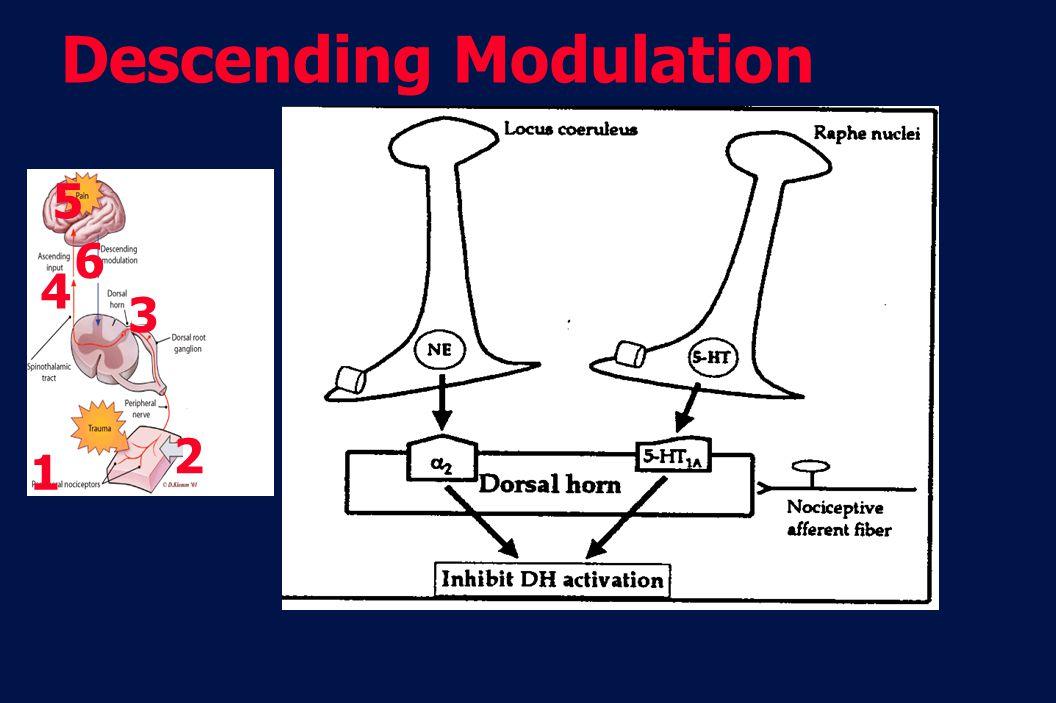 10 Revision 10, 10-26-01 1 2 6 3 4 5 Descending Modulation