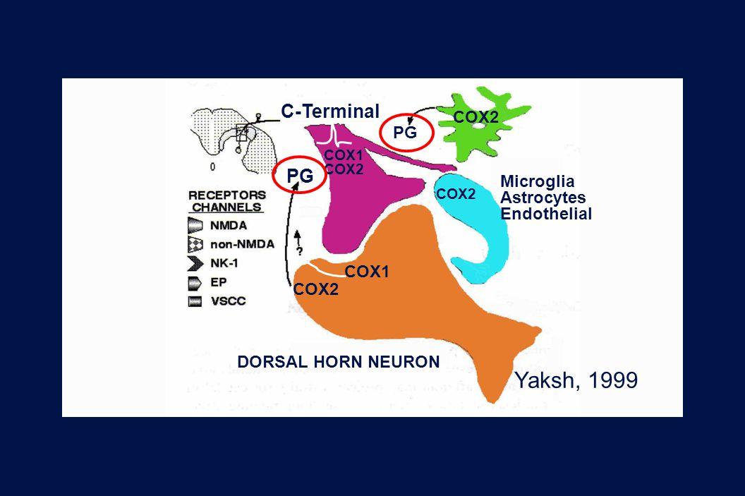 38 Revision 10, 10-26-01 Yaksh, 1999 C-Terminal COX2 PG DORSAL HORN NEURON COX2 COX1 COX2 COX1 Microglia Astrocytes Endothelial