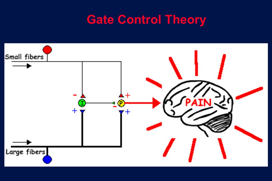 6 Revision 10, 10-26-01 Gate Control Theory