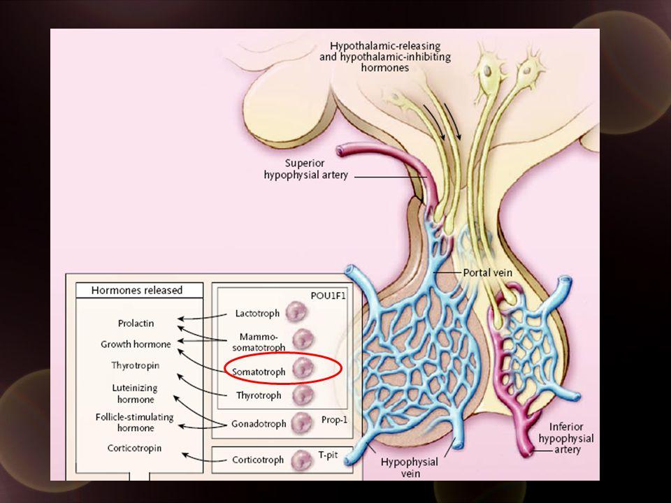 Somatostatin analogue Mechanism Of Action bind somatostatin receptor inhibit GH secretion inhibit Proliferation of Somatotropes Inhibit IGF-1 liver synthesis