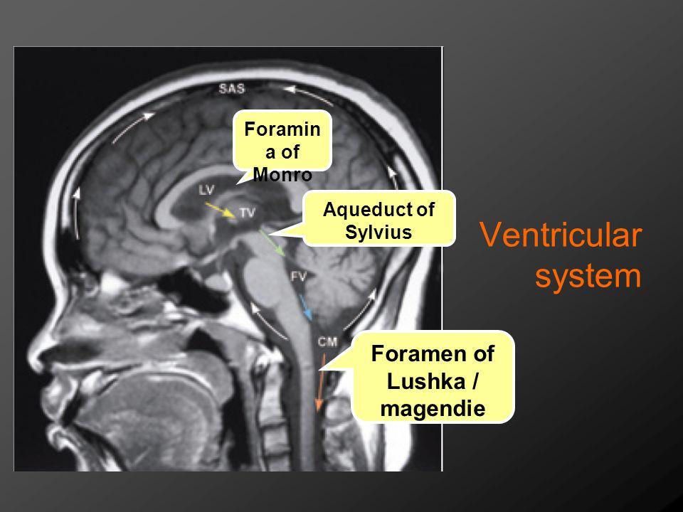 Ventricular system Foramin a of Monro Aqueduct of Sylvius Foramen of Lushka / magendie