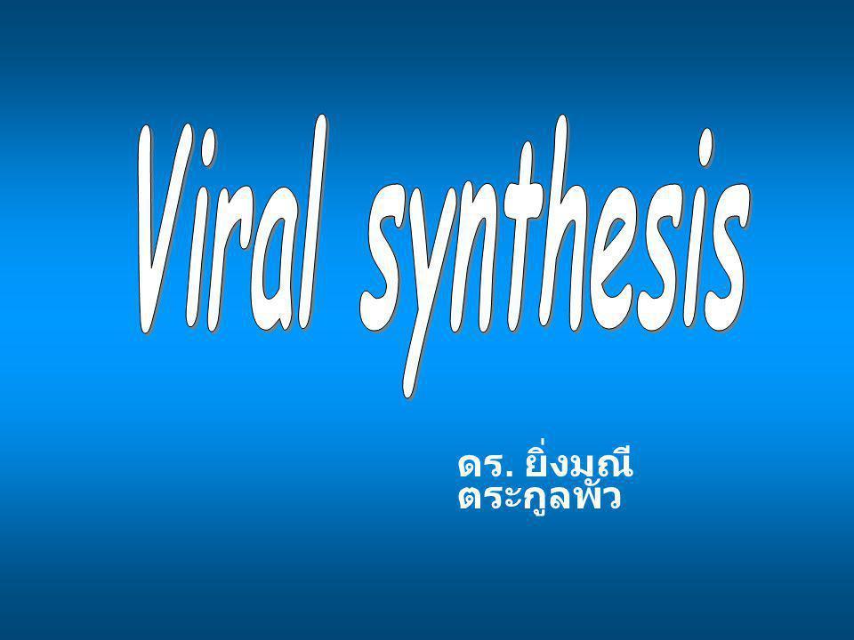 4.Poxvirus - ds DNA - ปลายข้างหนึ่งทำตัวเป็น primer 5.Hepatitis B -partial ds circular DNA complete (-) strand incomplete (+) strand