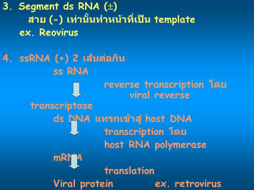 3. Segment ds RNA (  ) สาย (-) เท่านั้นทำหน้าที่เป็น template ex. Reovirus 4.ssRNA (+) 2 เส้นต่อกัน ss RNA reverse transcription โดย viral reverse tr