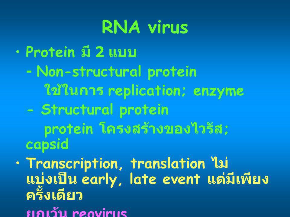 RNA virus Protein มี 2 แบบ - Non-structural protein ใช้ในการ replication; enzyme - Structural protein protein โครงสร้างของไวรัส ; capsid Transcription