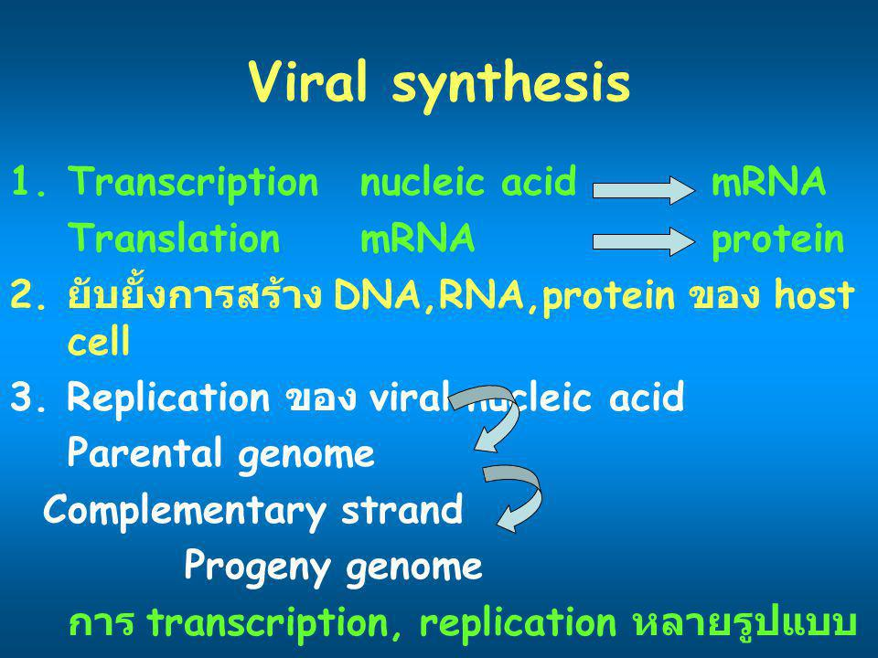 Viral synthesis 1.Transcriptionnucleic acidmRNA TranslationmRNAprotein 2.