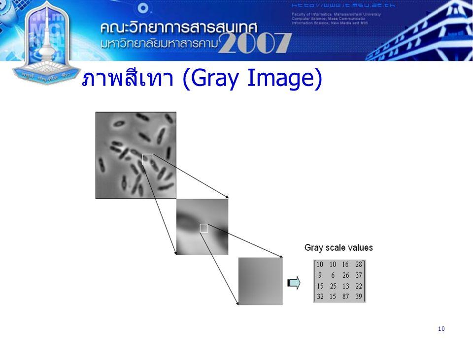 10 ภาพสีเทา (Gray Image)