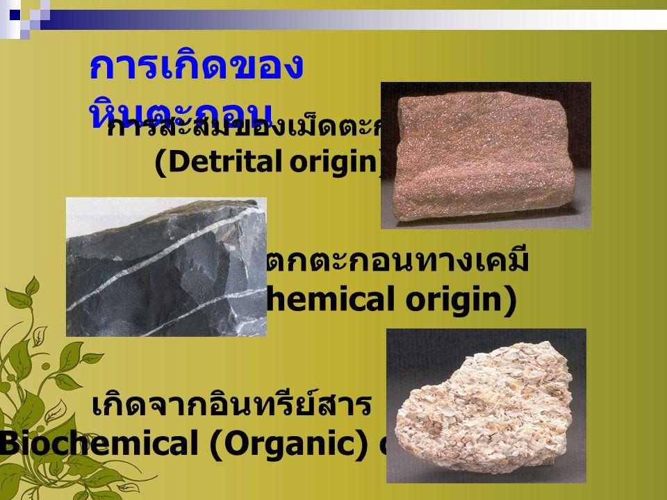 การเกิดของ หินตะกอน การสะสมของเม็ดตะกอน (Detrital origin) การตกตะกอนทางเคมี (Chemical origin) เกิดจากอินทรีย์สาร [ Biochemical (Organic) origin ]