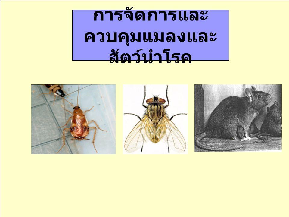 การจัดการและ ควบคุมแมลงและ สัตว์นำโรค