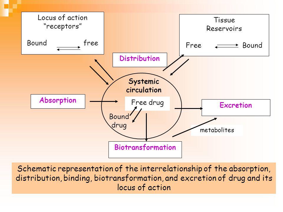 Pharmacokinetics What body does to the drugs กระบวนการที่ร่างกายจัดการ กับยา Absorption Distribution Metabolism Excretion elimination Biotransformatio