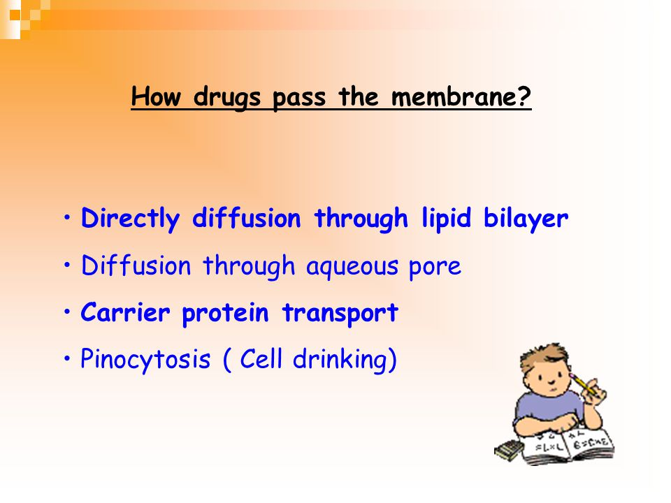 Directly diffusion through lipid bilayer Diffusion through aqueous pore Carrier protein transport Pinocytosis ( Cell drinking) How drugs pass the membrane?