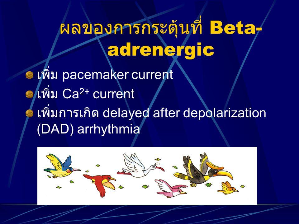 ผลของการกระตุ้นที่ Beta- adrenergic เพิ่ม pacemaker current เพิ่ม Ca 2+ current เพิ่มการเกิด delayed after depolarization (DAD) arrhythmia