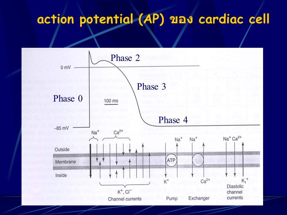 Group of antiarrhythmic drugs Class I: Sodium channel blockers (Potent local anesthetic) ลดการเกิด phase O จึงมีผลลด excitability, conduction velocity Class IA: Quinidine, Procainamide, Disopyramide Class IB: Lidocaine, Tocainide, Mexiletine, Phenytoin Class IC: Flecainide
