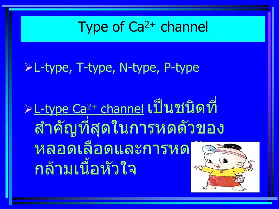 Type of Ca 2+ channel  L-type, T-type, N-type, P-type  L-type Ca 2+ channel เป็นชนิดที่ สำคัญที่สุดในการหดตัวของ หลอดเลือดและการหดตัวของ กล้ามเนื้อหัวใจ