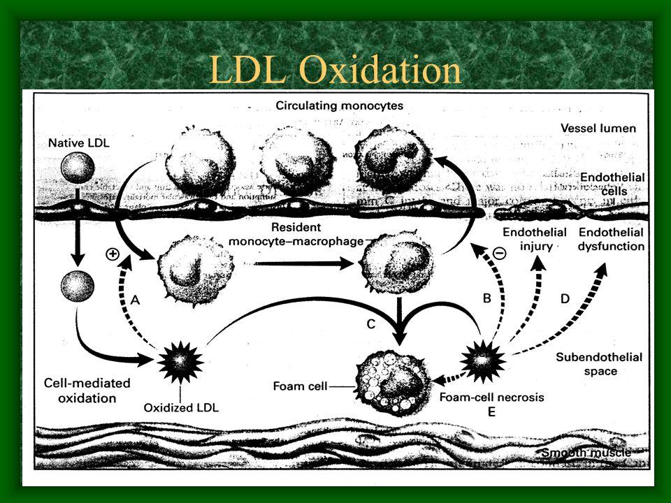 LDL Oxidation