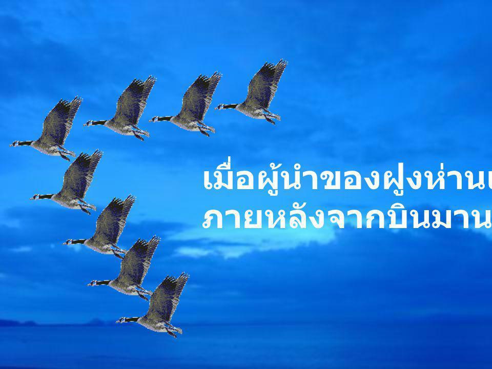 เมื่อผู้นำของฝูงห่านเริ่มอ่อนล้า ภายหลังจากบินมานาน..