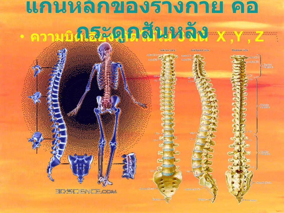 ความบิดเอียงเกิดได้ใน 3 มิติ X,Y, Z แกนหลักของร่างกาย คือ กระดูกสันหลัง