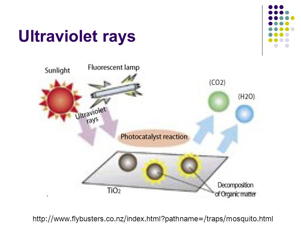 Ultraviolet rays http://www.flybusters.co.nz/index.html?pathname=/traps/mosquito.html
