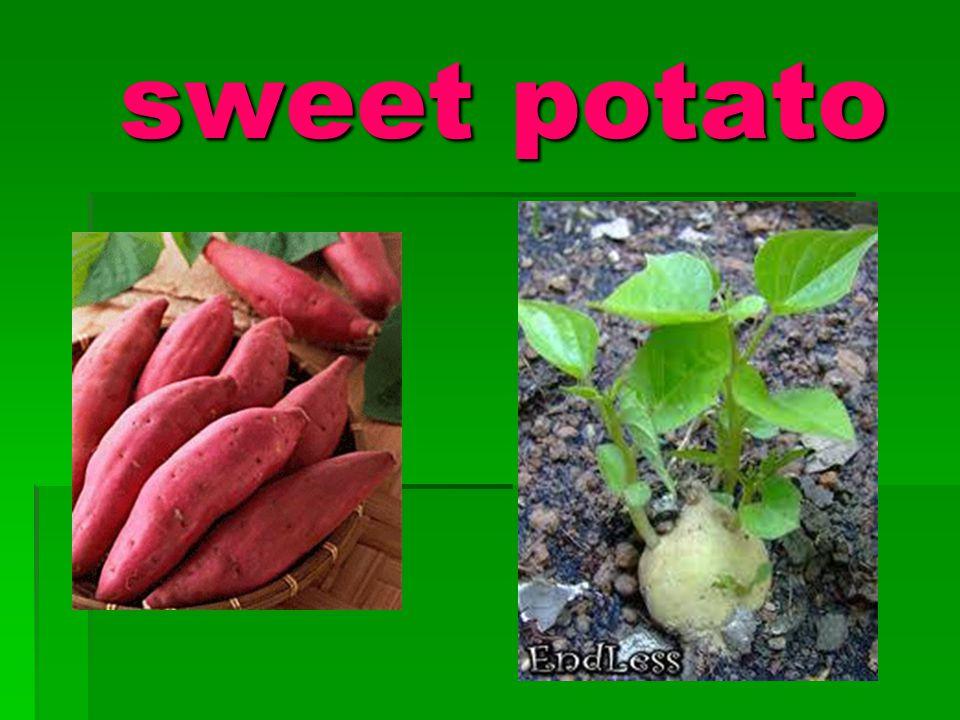 sweet potato sweet potato