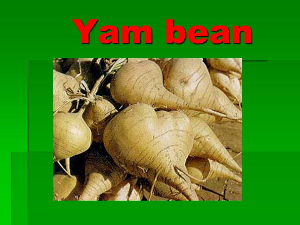 Yam bean Yam bean