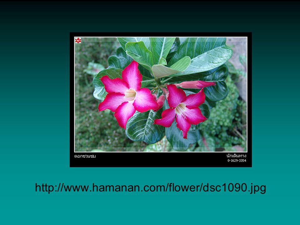 http://www.hamanan.com/flower/dsc1090.jpg