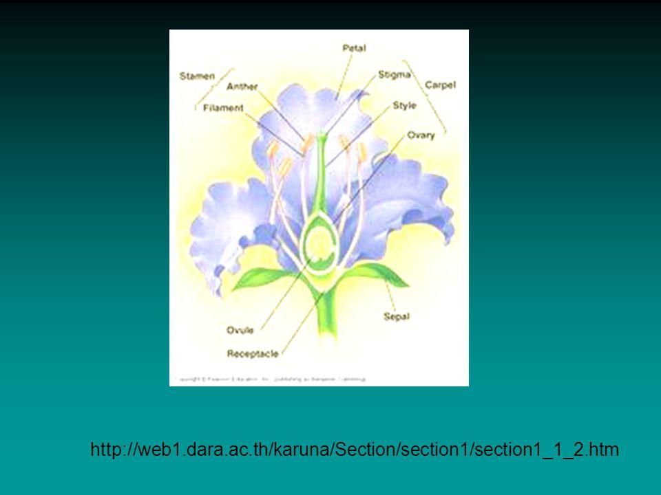 http://www.hamanan.com/flower/index.html