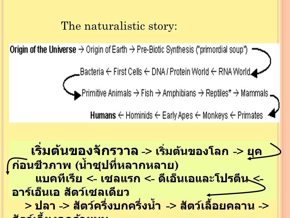 The naturalistic story: เริ่มต้นของจักรวาล -> เริ่มต้นของโลก -> ยุค ก่อนชีวภาพ ( น้ำซุปที่หลากหลาย ) แบคทีเรีย ปลา -> สัตว์ครึ่งบกครึ่งน้ำ -> สัตว์เลื้อยคลาน -> สัตว์เลี้ยงลูกด้วยนม <- โฮมินิด <- สัตว์ประเภทลิงที่คล้ายมนุษย์ <- ลิง <- ไพรเมท