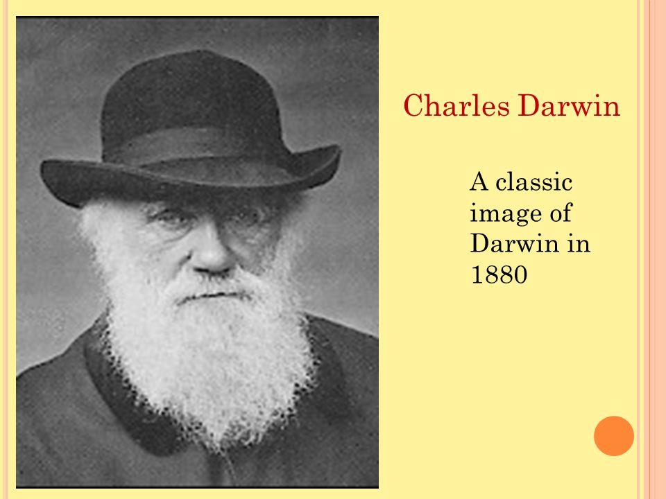 A classic image of Darwin in 1880 Charles Darwin