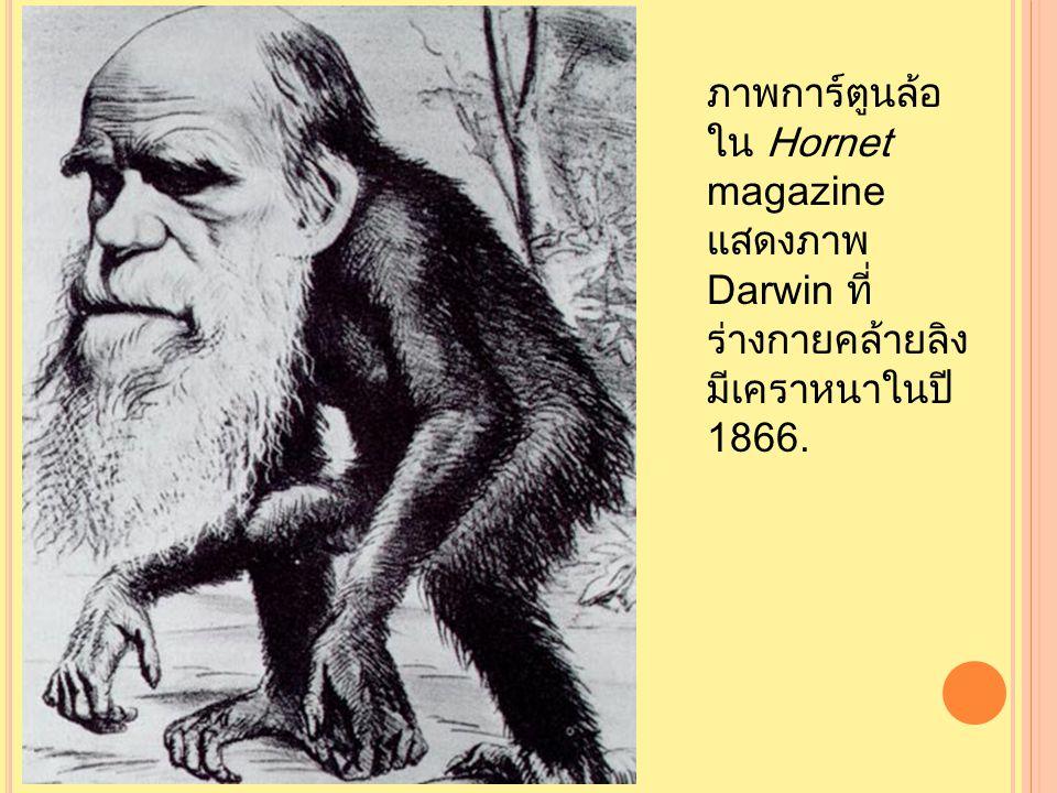 ภาพการ์ตูนล้อ ใน Hornet magazine แสดงภาพ Darwin ที่ ร่างกายคล้ายลิง มีเคราหนาในปี 1866.