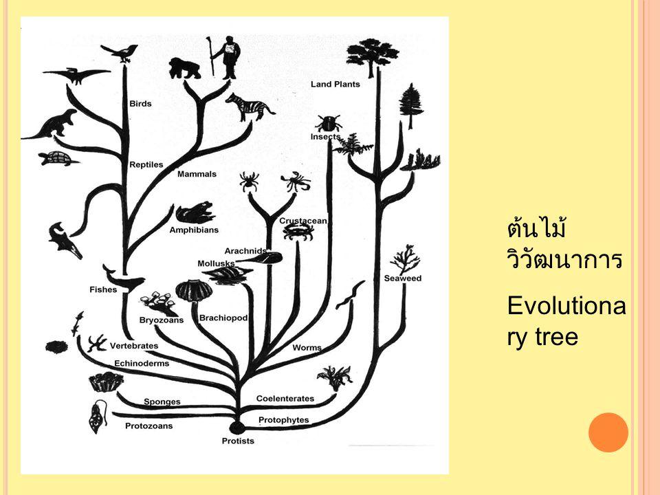 ต้นไม้ วิวัฒนาการ Evolutiona ry tree