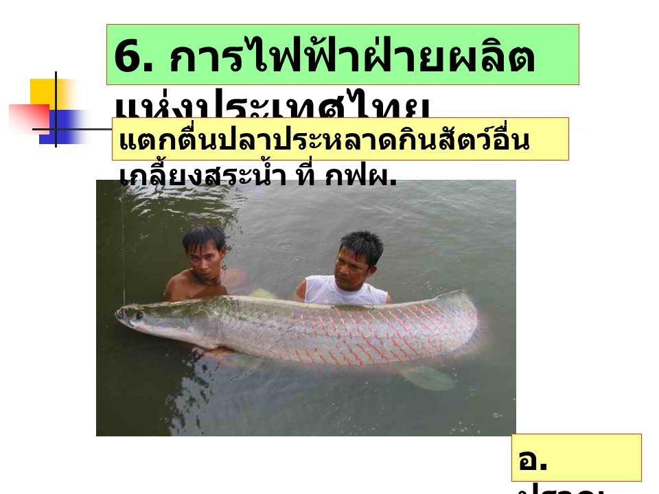 6. การไฟฟ้าฝ่ายผลิต แห่งประเทศไทย แตกตื่นปลาประหลาดกินสัตว์อื่น เกลี้ยงสระน้ำ ที่ กฟผ. อ. ปราณ บุรี