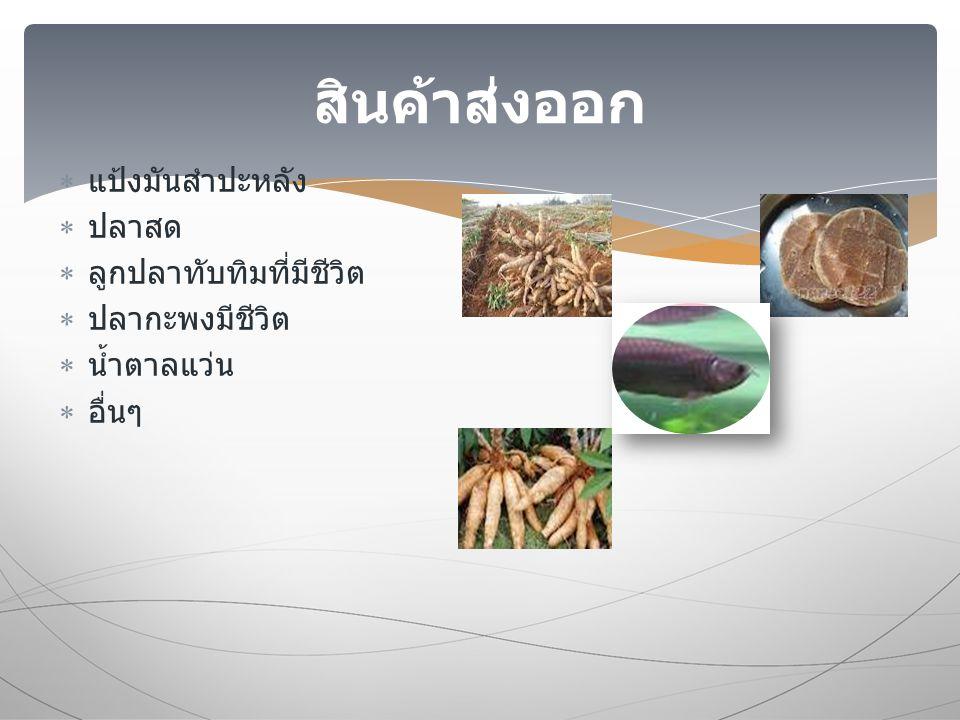  แป้งมันสำปะหลัง  ปลาสด  ลูกปลาทับทิมที่มีชีวิต  ปลากะพงมีชีวิต  น้ำตาลแว่น  อื่นๆ สินค้าส่งออก