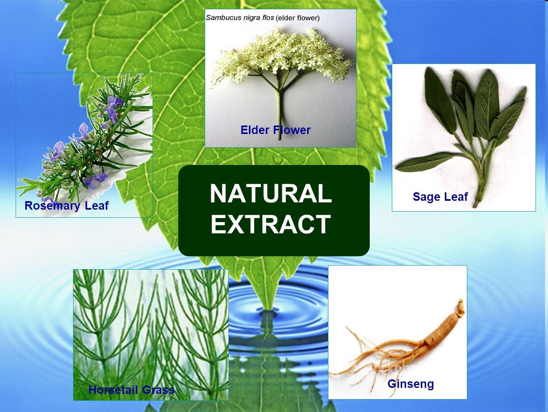 Rosemary Leaf Elder Flower Sage Leaf Ginseng Horsetail Grass NATURAL EXTRACT