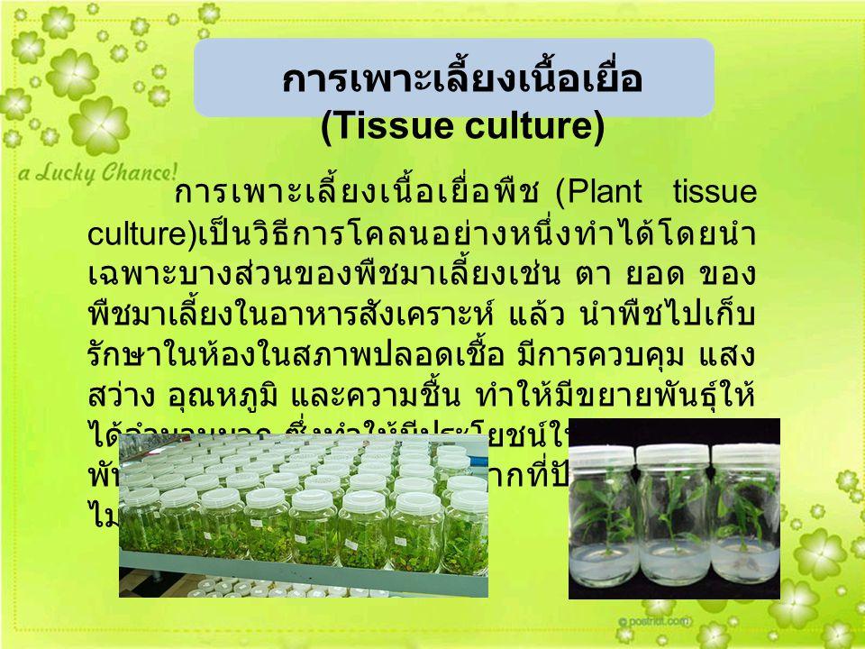 การเพาะเลี้ยงเนื้อเยื่อพืช (Plant tissue culture) เป็นวิธีการโคลนอย่างหนึ่งทำได้โดยนำ เฉพาะบางส่วนของพืชมาเลี้ยงเช่น ตา ยอด ของ พืชมาเลี้ยงในอาหารสังเ